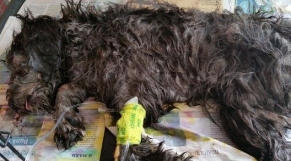 Quick links to share the petition: Justice for Billy, puppy thrown into cardboard crushing machine by Cyprus hotel employees! | Yousign.org