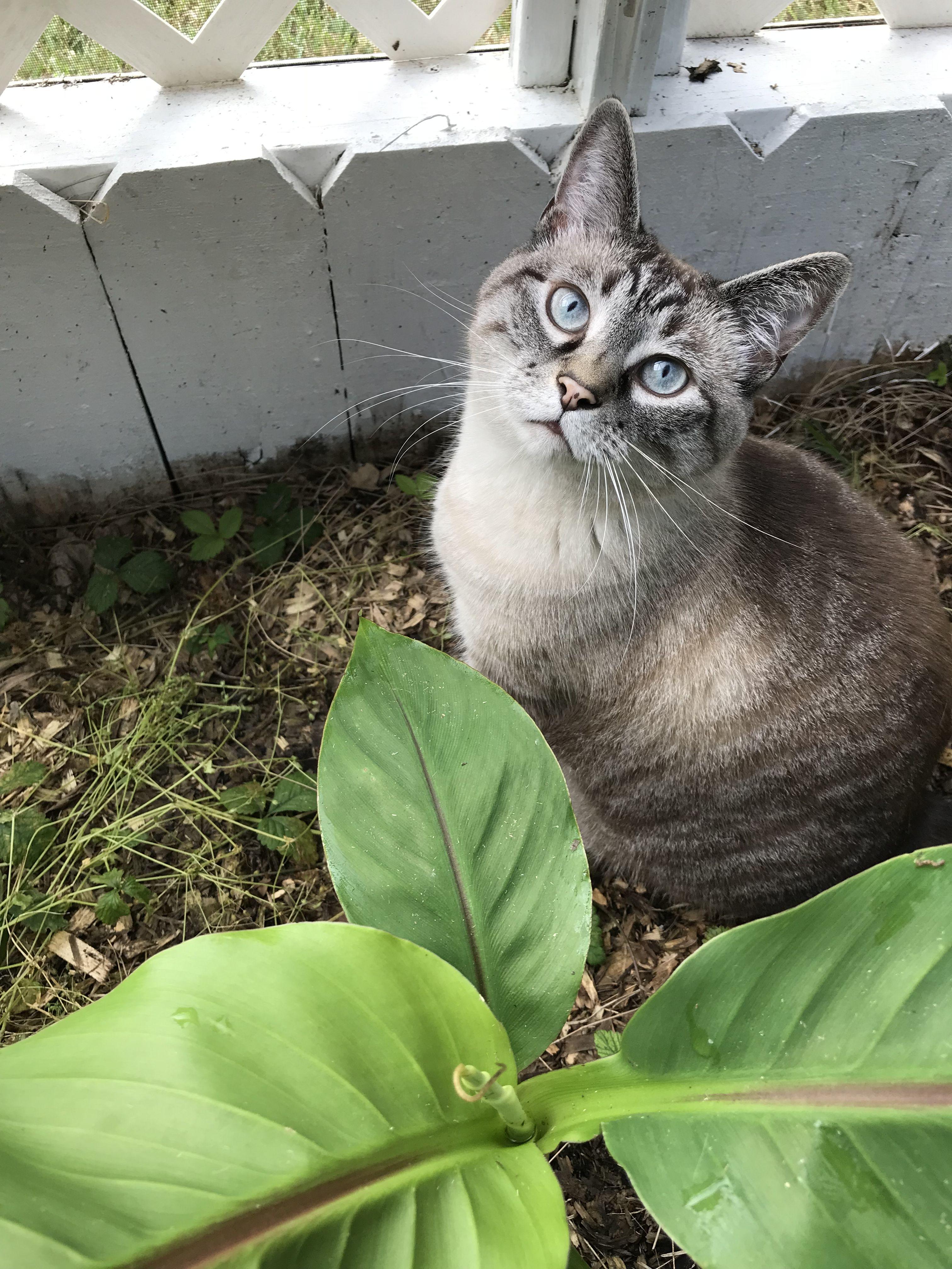exploring the catio Outdoor cat enclosure, Cat