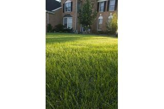 Best option to seed grass in clay and rocky soil