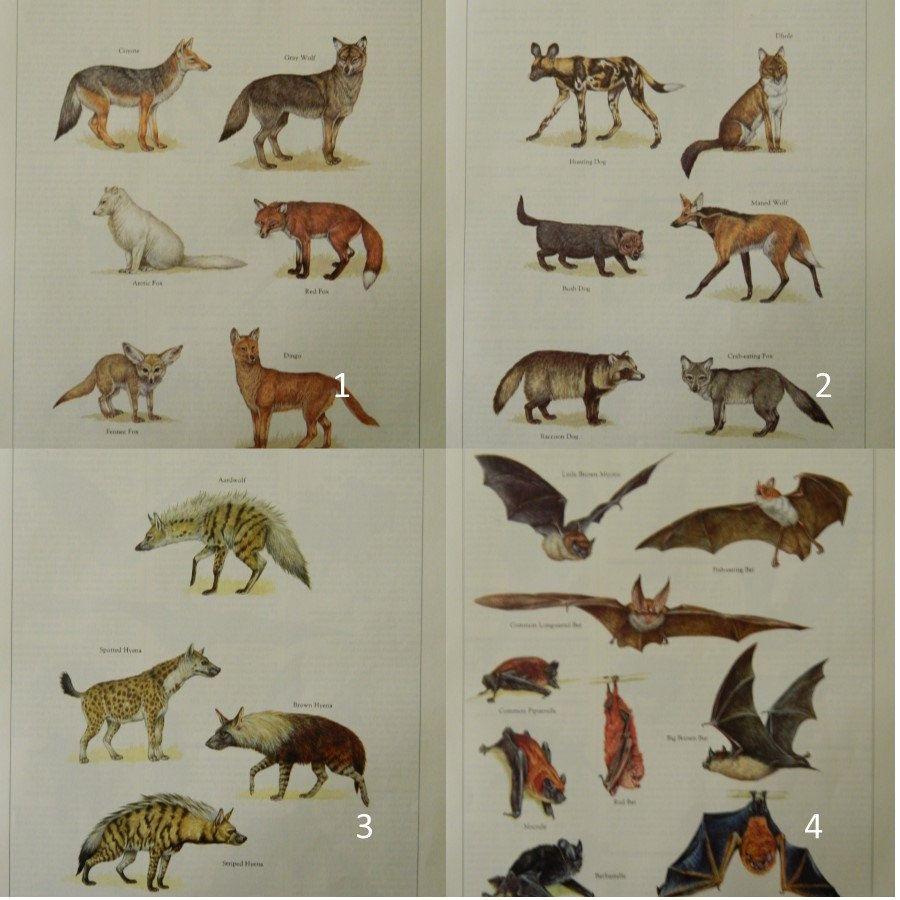 Vintage Animal Prints  Animal Illustrations  Encyclopedia of