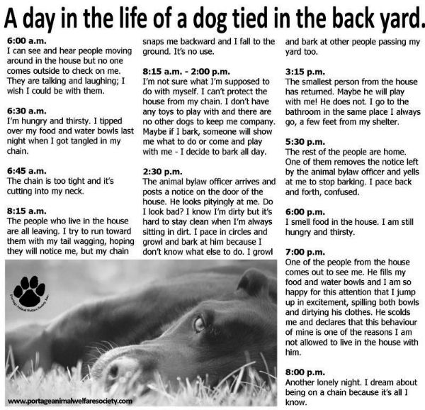Heartbreaking Graphic Describes A Day In The Life Of A Chained Dog Dog Tie Dogs And Puppies Dogs