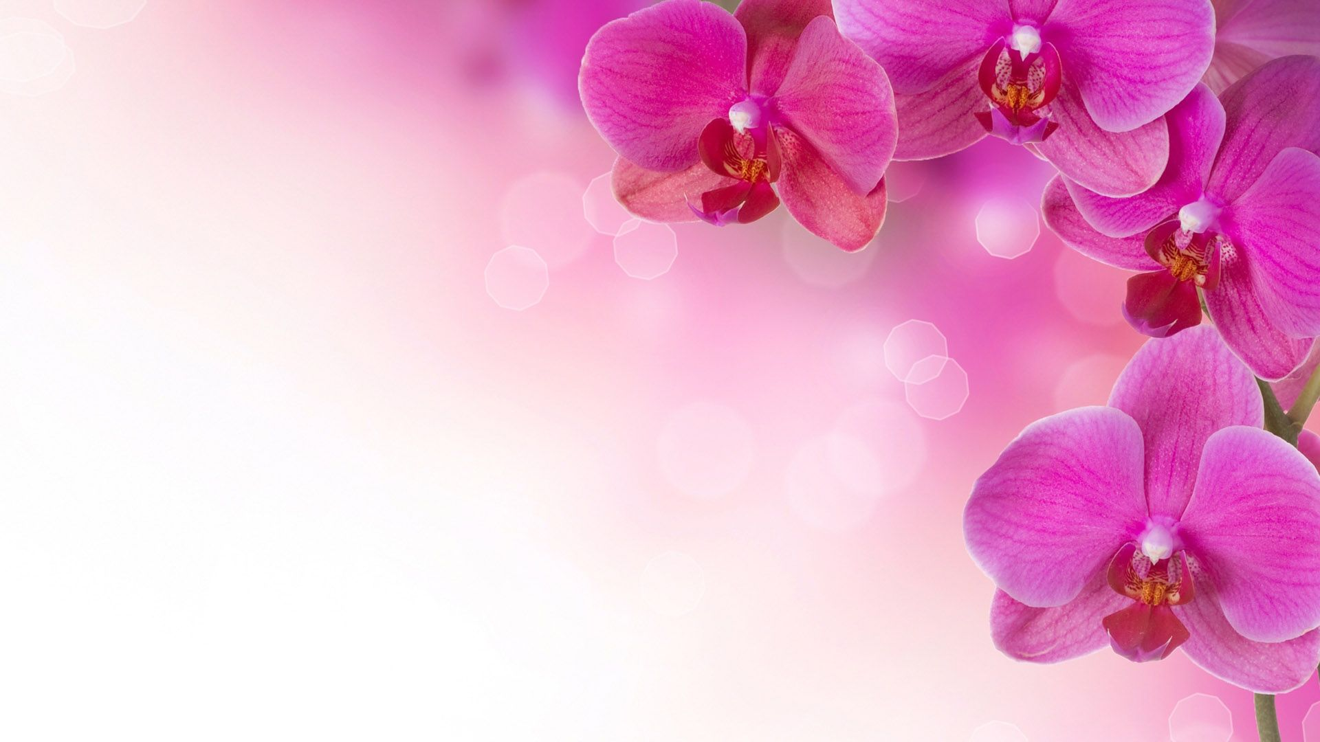 Download Wallpaper 3840x2400 Orchid Flower Branch Sky Ultra Hd 4k Hd Background Orchid Wallpaper Orchids Purple Spring Flowers