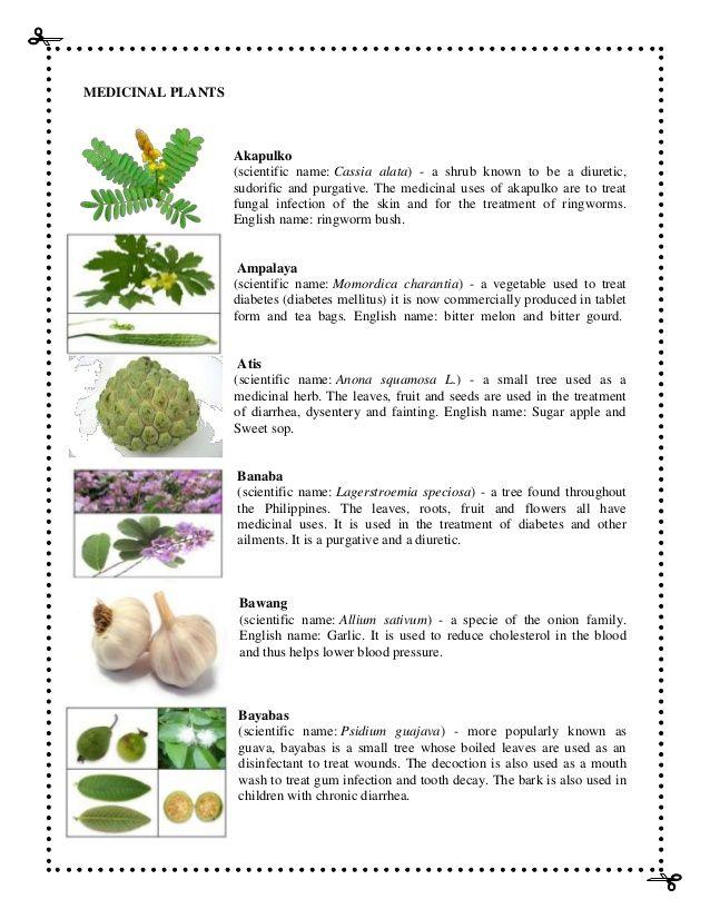 Related Image Medicinal Herbs Herbalism Herbal Medicine