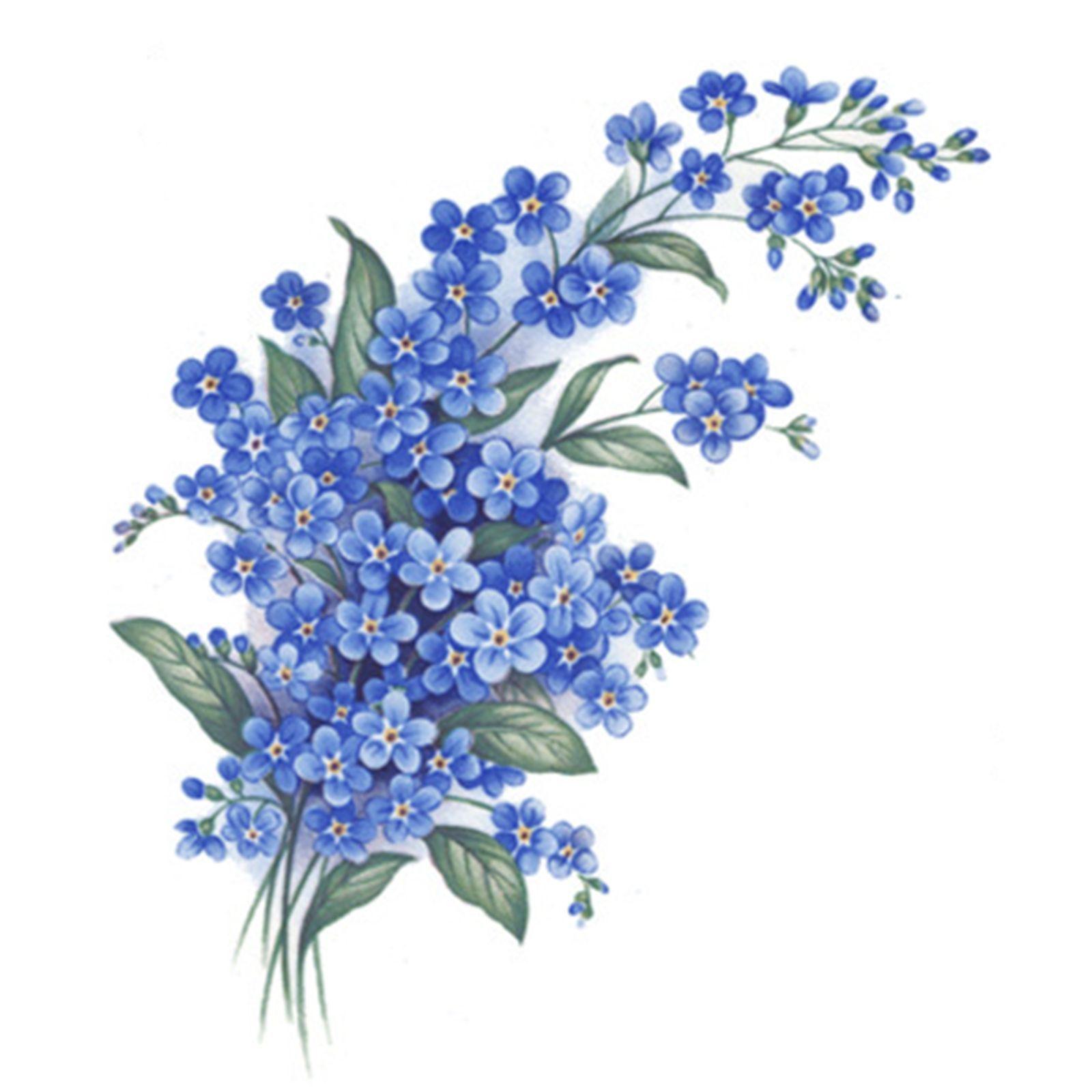 Картинки незабудки цветы нарисованные, картинка анимация открытки
