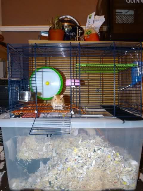 Unsuitable Gerbil Cage Setups Gerbil Hamster Cages Gerbil Cages