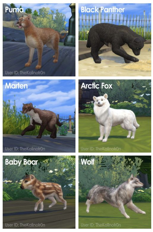 Puma Black Panther Marten Arctic Fox Baby Boar And Wolf At Kalino Sims Pets Sims 4 Pets Sims 4 Pets Mod