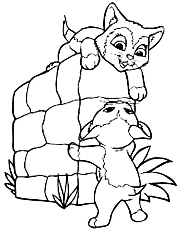 Two Little Kitty Cat Playing Together Coloring Page Kids