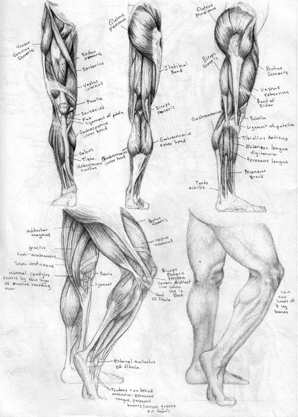 Legs Sketches Leg Sketch Learn The Leg Muscles And Msc Arts In