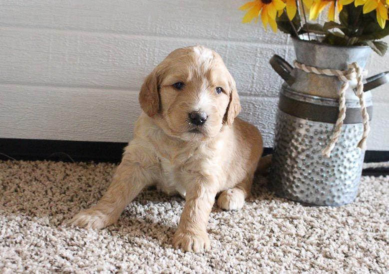 Clement in 2020 Puppy finder, Puppy adoption, Puppies