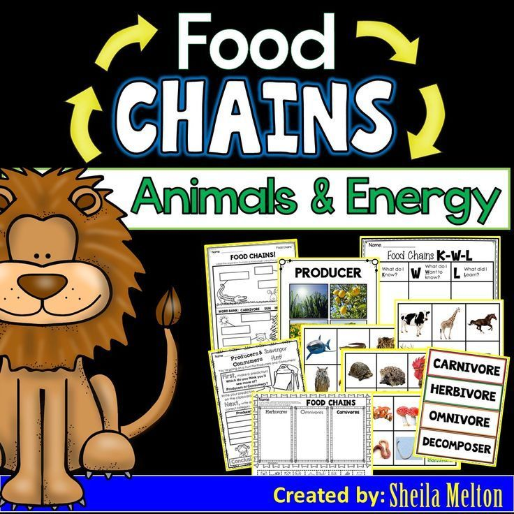 Food Chains Food chain activities, Science notebooks