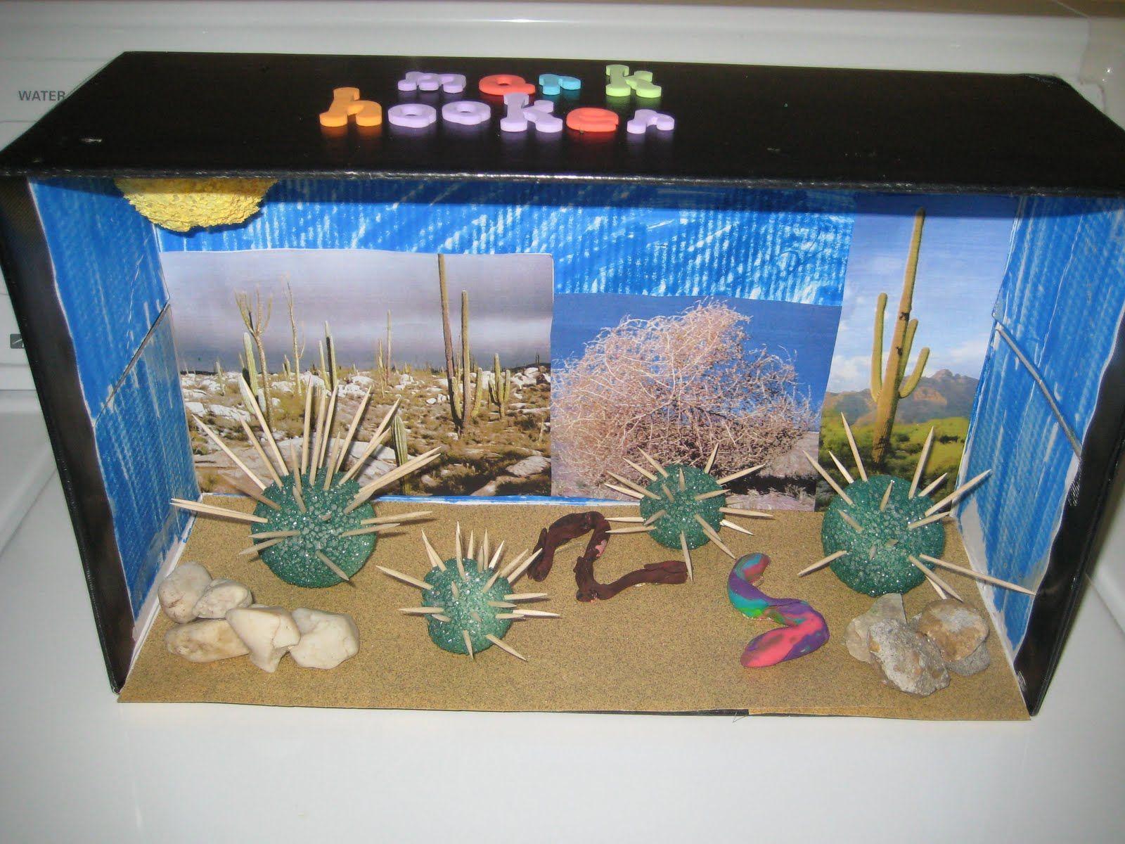 Ecosystem Desert Project Shoebox Google Search We