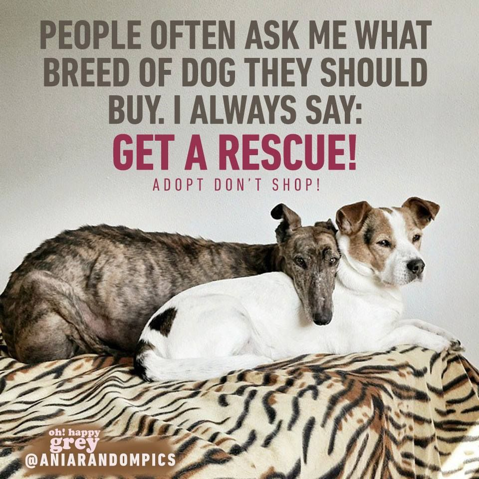 Animal Cruelty Quotes Want The Best Get A Rescue  Animal Adoption & Rescue