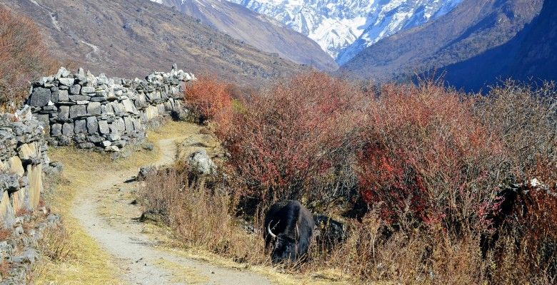 Langtang Trek Langtang, Nepal trekking, Alpine forest