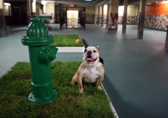 Summer Jet Set Pet Friendly Travel Indoor Dog Park Dog Hotel Dog Playground