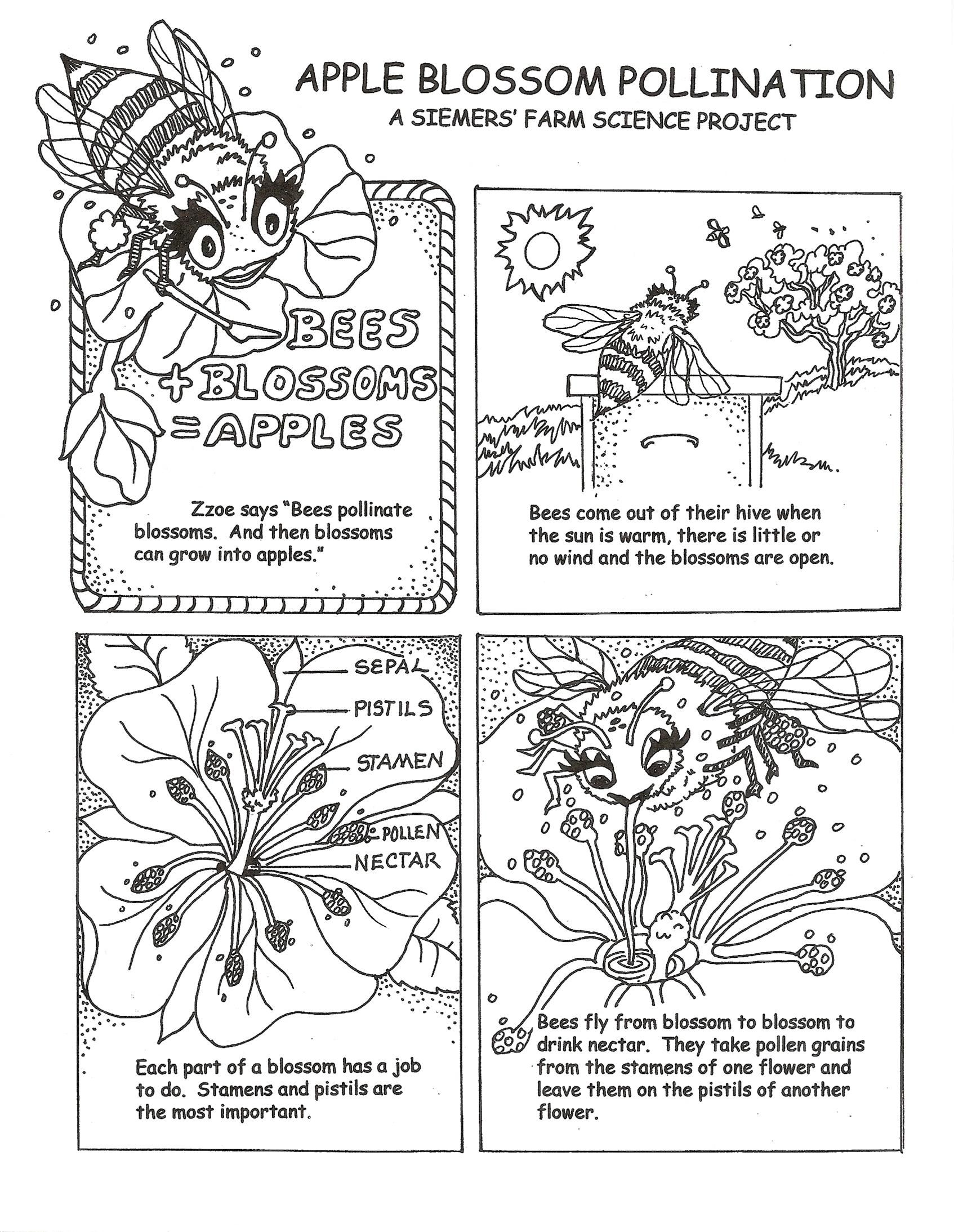 I Have Wanted To Do An Educational Pollinator Coloring Book For A While Here S A Great Page