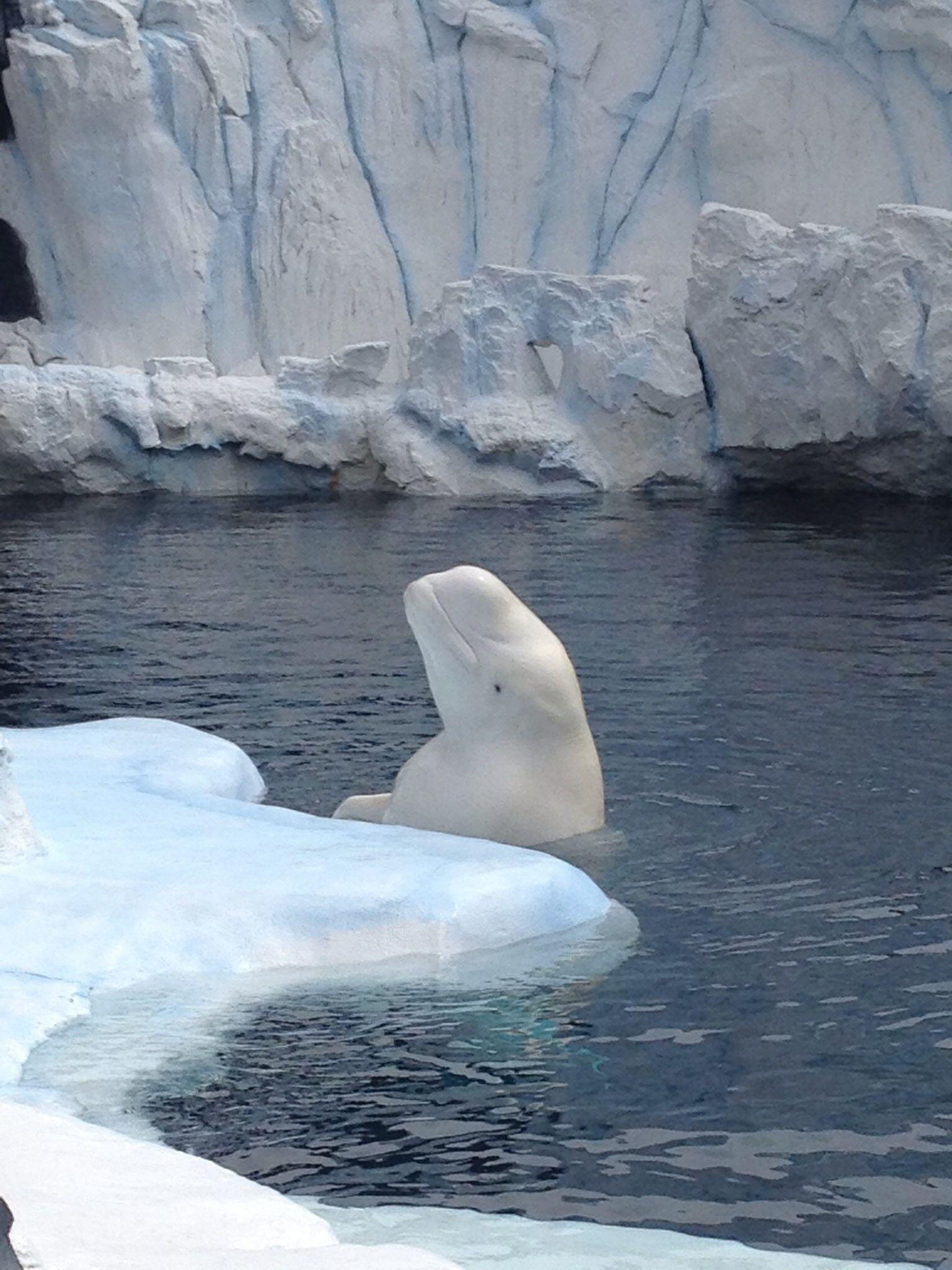 Underwater Animals, Ocean Creatures