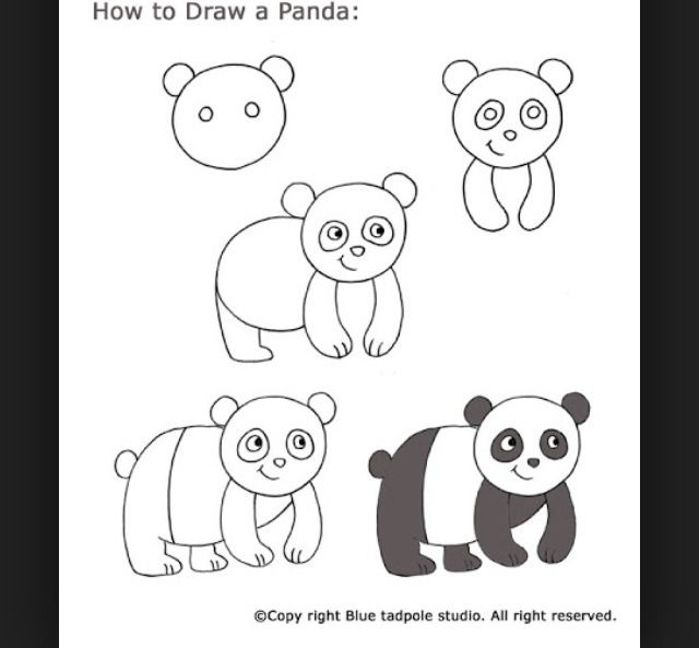 How To Draw Animals For Beginners Panda Drawing Easy Drawings Drawing For Kids