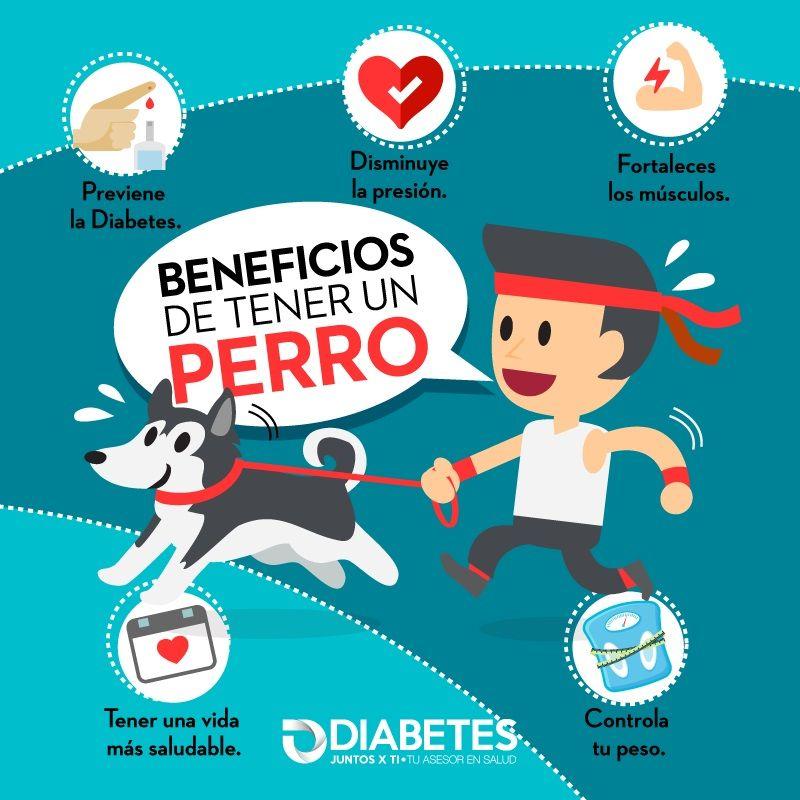 diabetes benéfica de sulphurea beneficiosa