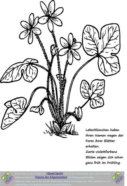 Ausmalbild Blumen Kräuter Der Blumenwiese Sprüche