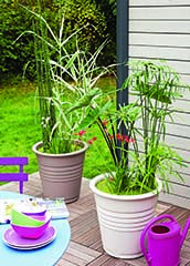 Coach jardin : création d\'un jardin de pots aquatiques - jardinerie ...