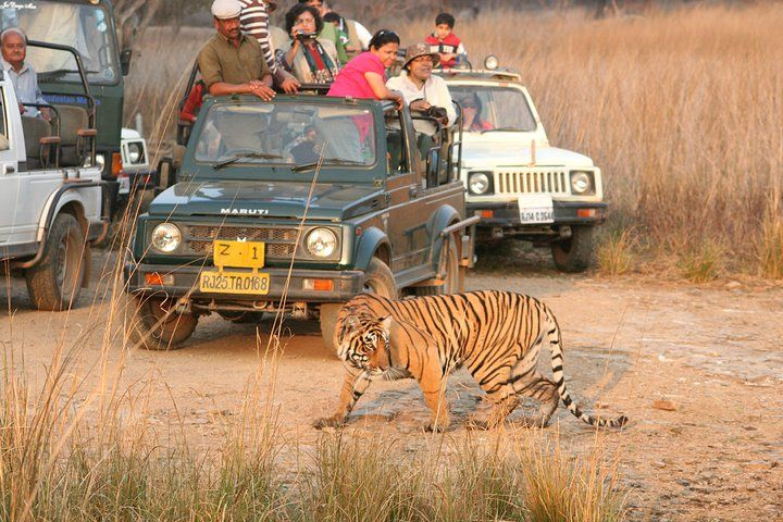 Are You Looking For Travel Agents And Tour Operators In India