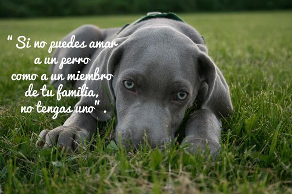 Citas Sobre Perros Página 5 Mi Perro Es único Perros Amantes De Perros Perros Graciosos
