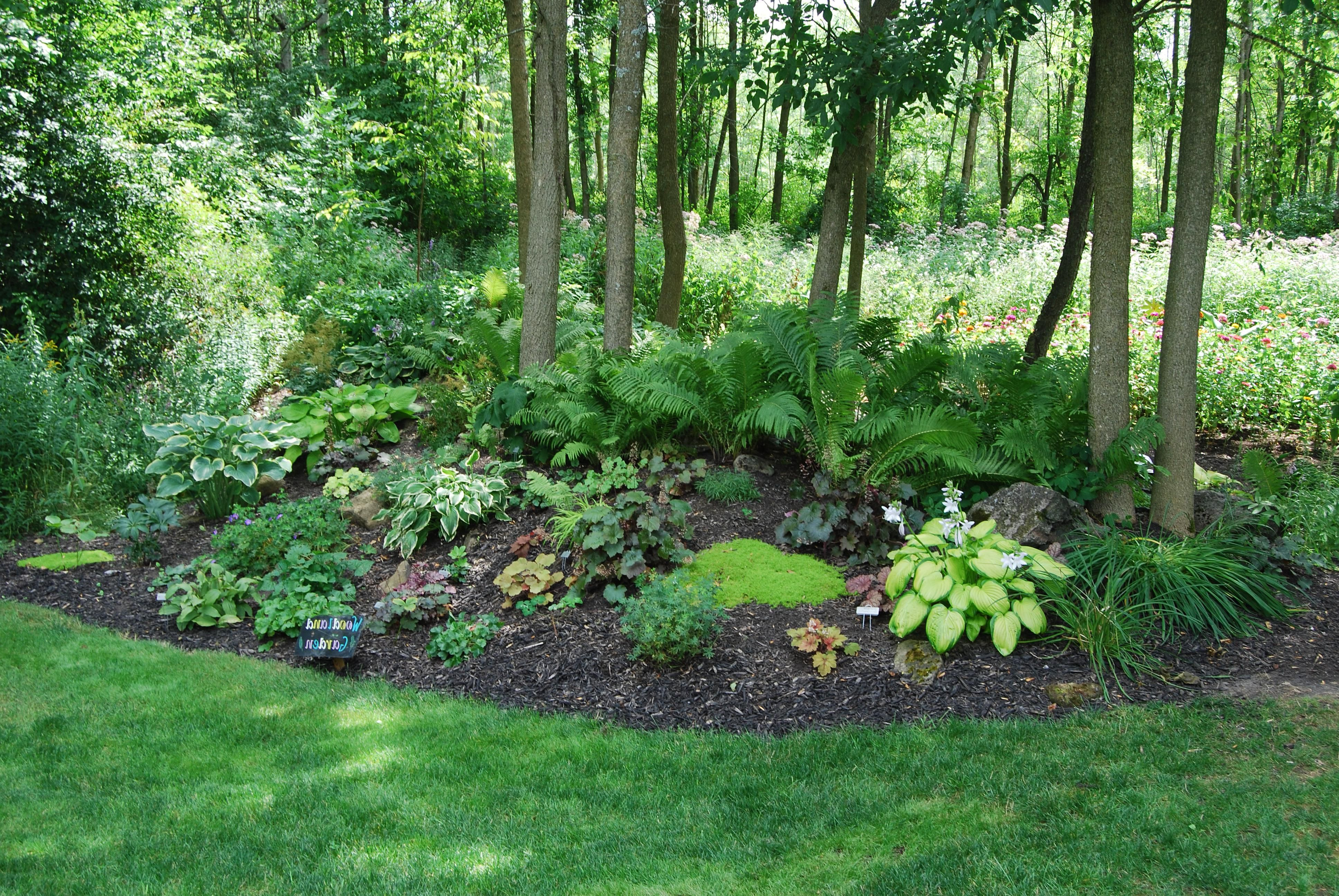 Wooded Backyard Landscaping Ideas Landscaping Pinterest