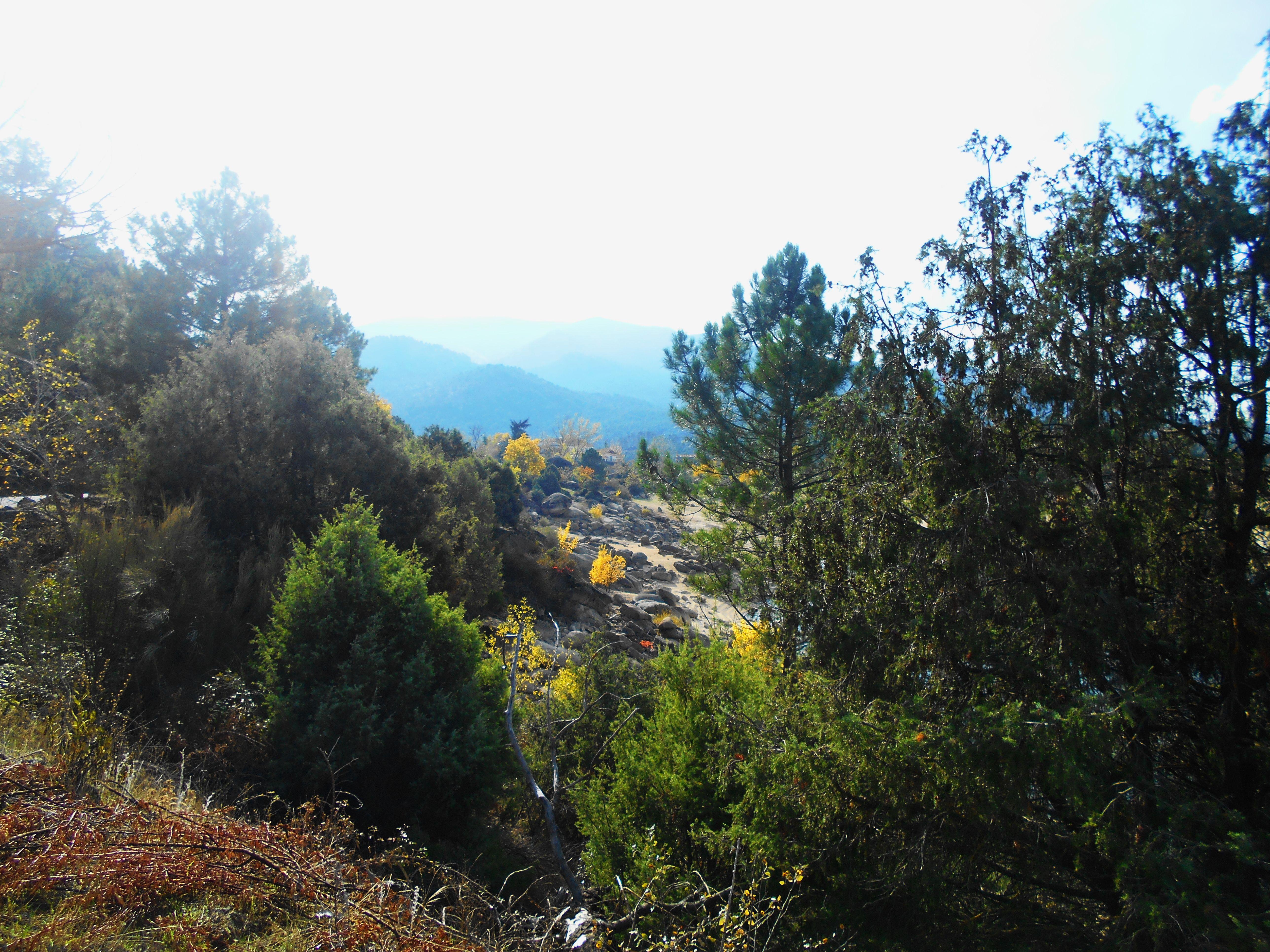 Vegetación de baja y media montaña junto al embalse de El Burguillo.