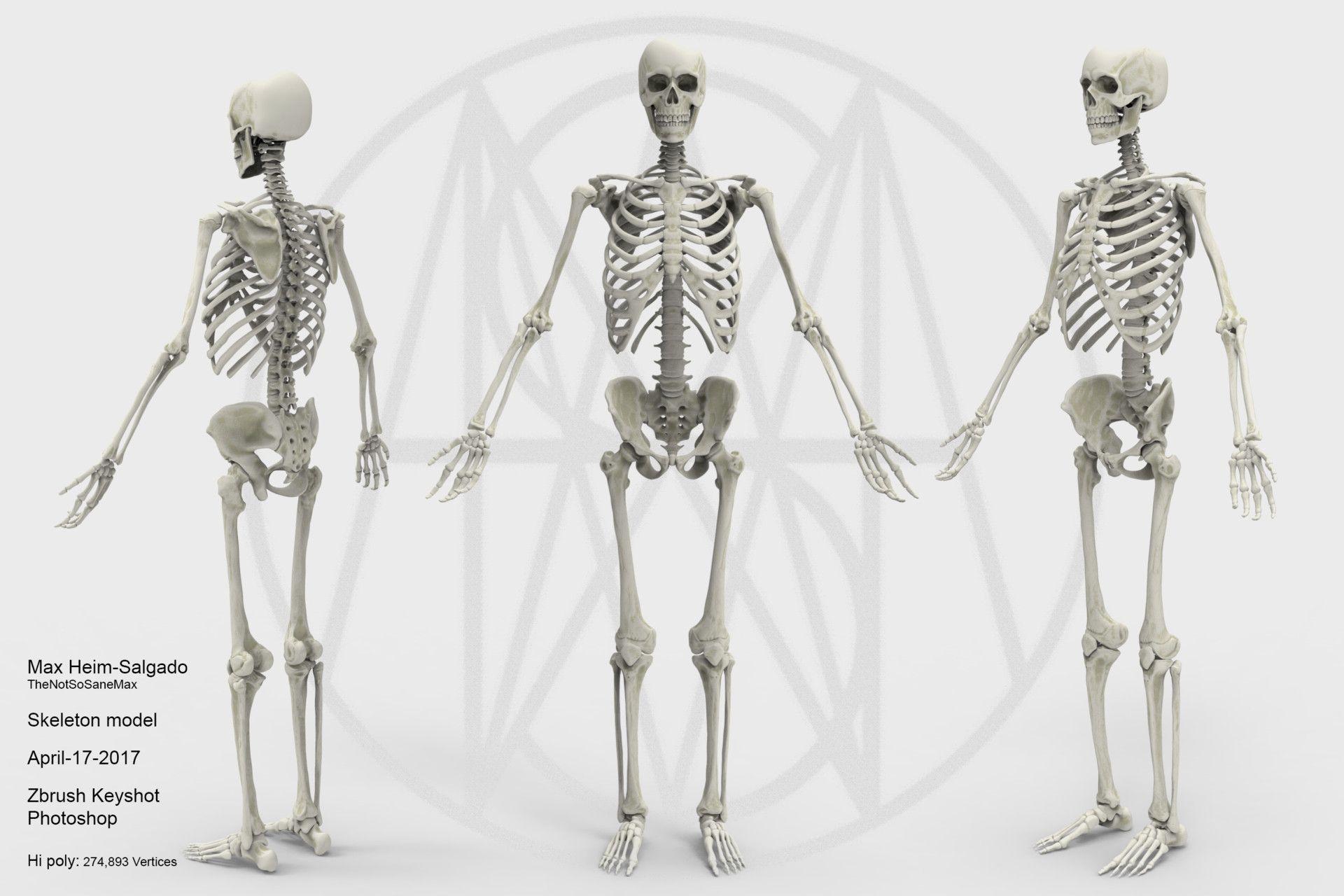 Artstation Human Male Skeleton Max Heim Salgado Virtual 3d