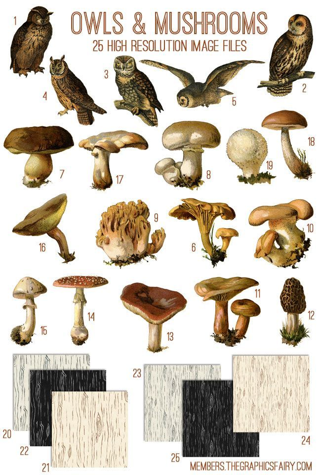 A beautiful Graphics Bundle with Vintage Owls and Mushrooms and a Wood Grain Texture