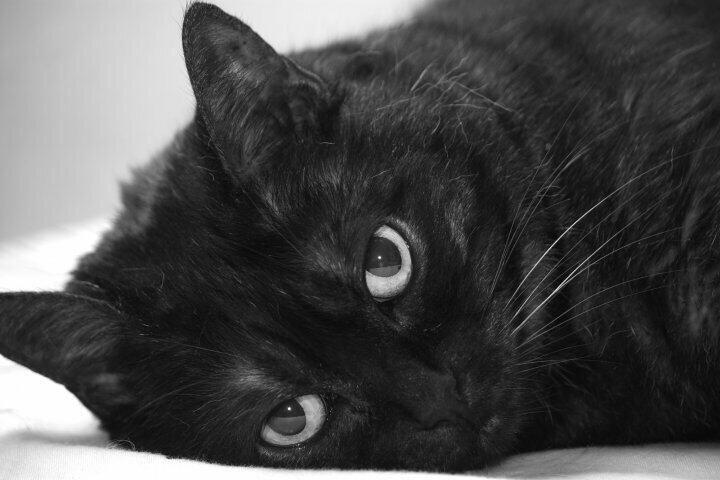 Carole Du 33 On Pretty Cats Kittens Cutest Cute Animals