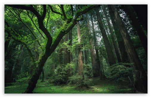 Beautiful Forest Hd Desktop Wallpaper High Definition Fullscreen Mobile Forest Wallpaper Beautiful Forest Jungle Wallpaper