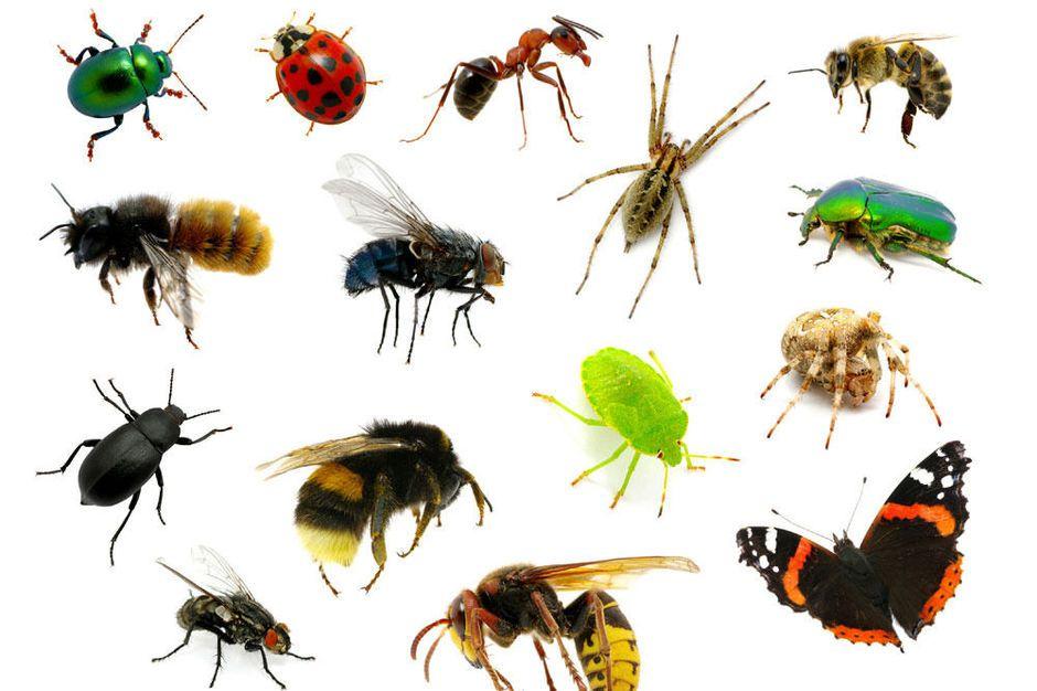 Biodiversiteit Gaan We Naar Een Wereld Vol Muggen Kakkerlakken En Buxusmotten Insecten Dieren Planet