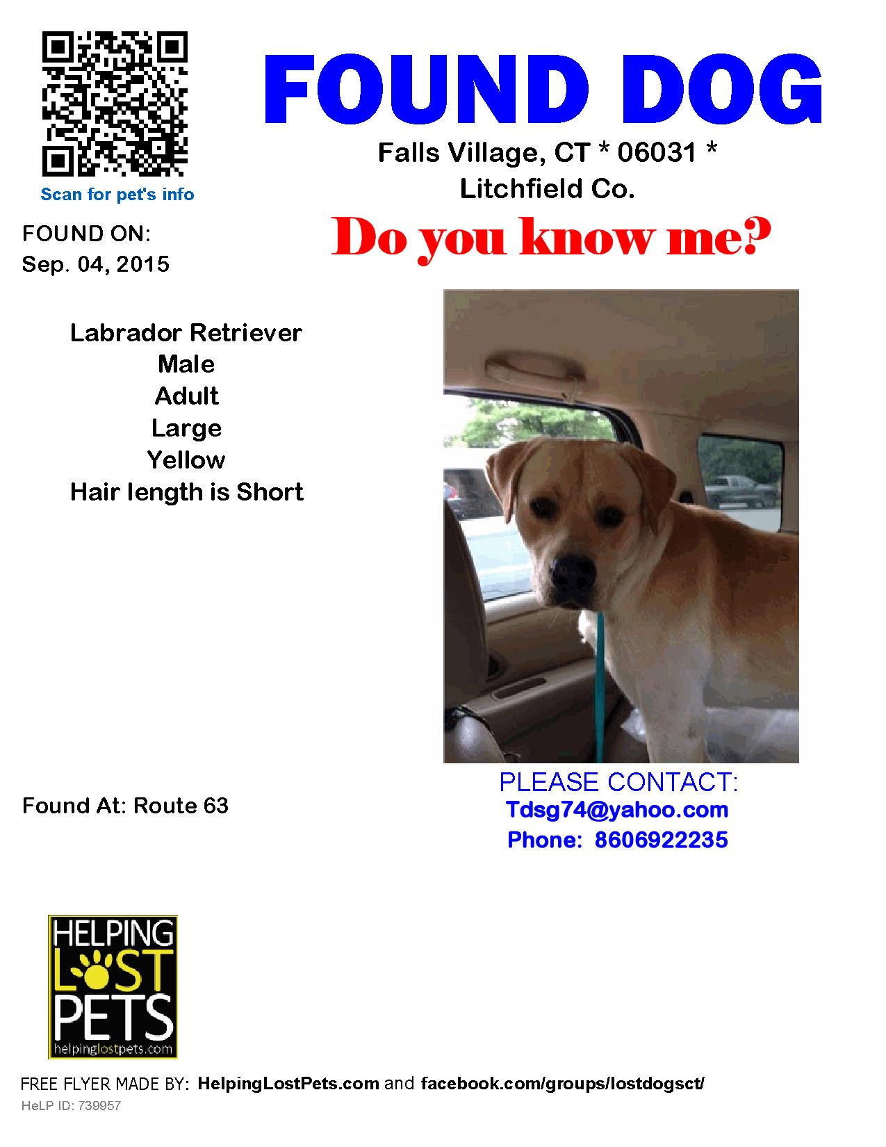 Found Dog Labrador Retriever Falls Village Ct United States