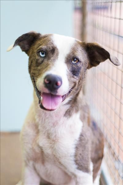 Meet Kenzie He Didn T Have The Best Start To Life And Wound Up At Our Doors In Toowoomba He Was In A Bad Way Kenzie Had A Sever Pets Adoption Animal