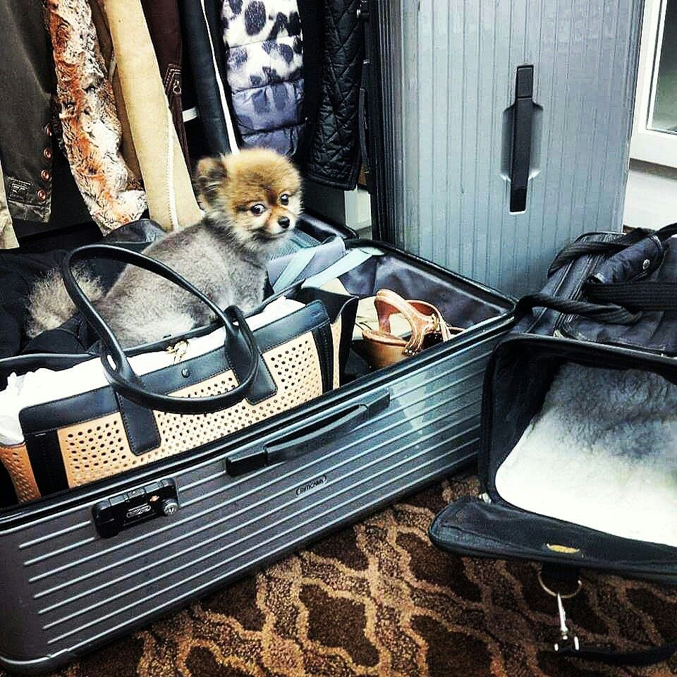 Kody Van Halen Packed And Ready To Go This Little Dude Is Always Ready To Go On Tour With His Daddy Eddie Van Halen And Of Course With Mommy Janie Van Halen