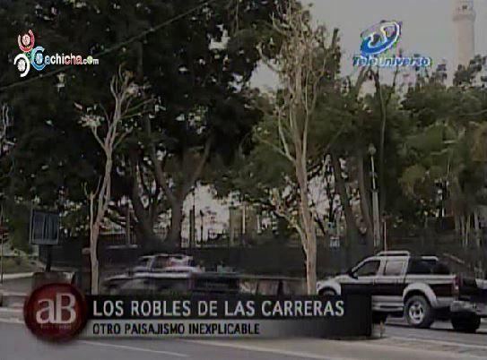 Reportaje: Los Robles De Las Carreras – Otro Paisajismo Inexplicable ...