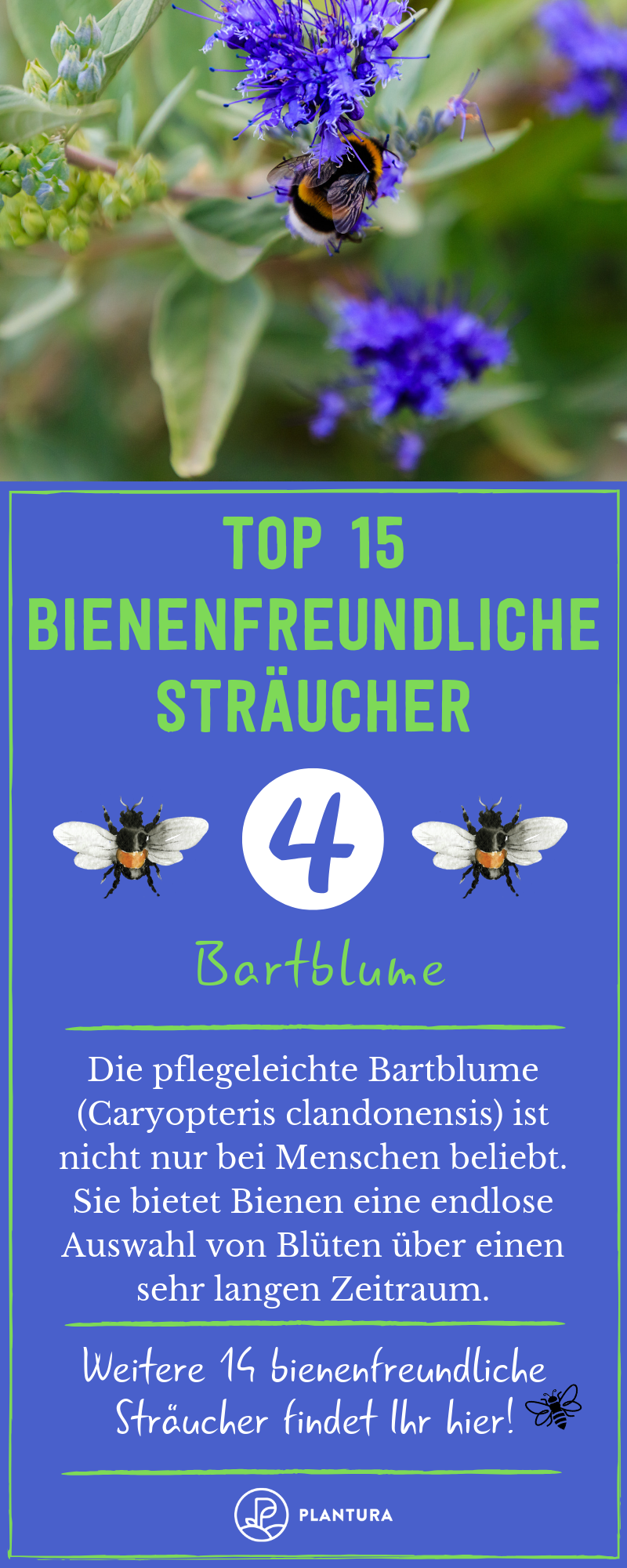 Bienenfreundliche Straucher Top 15 Bienenstraucher Bienenfreundliche Straucher Bienenfreundlicher Garten Straucher Garten