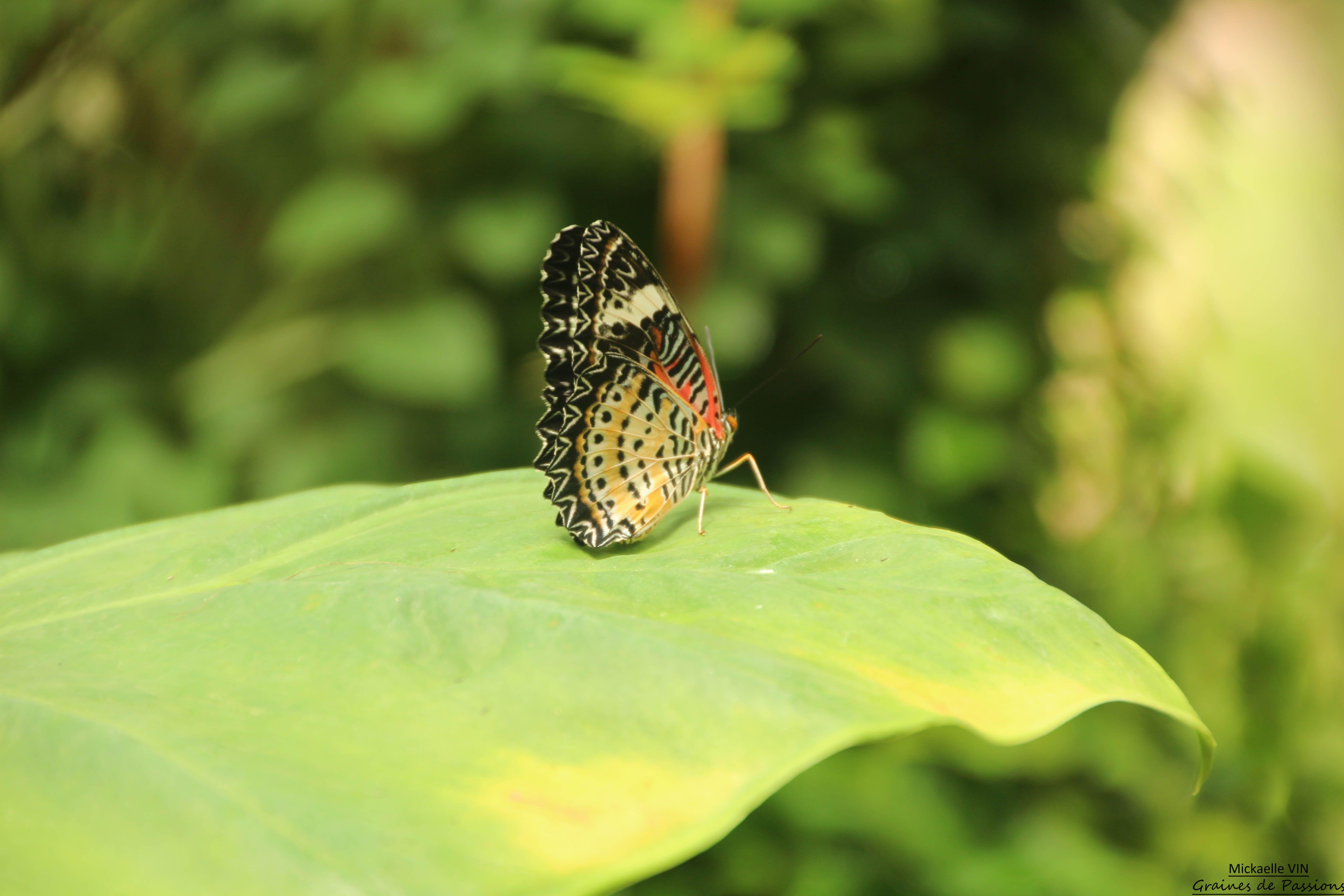 Jardin des Papillons - Vannes