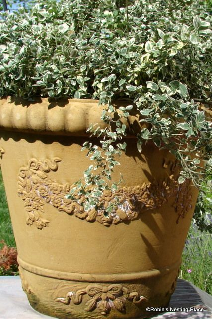 orange cement planter | have several of them! The containers are still in great shape but . & orange cement planter | have several of them! The containers are ...