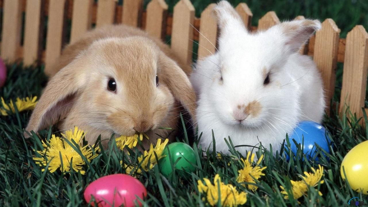 easter+bunny+goodnight+image | Categories: Funny Animals , Funny Compilations