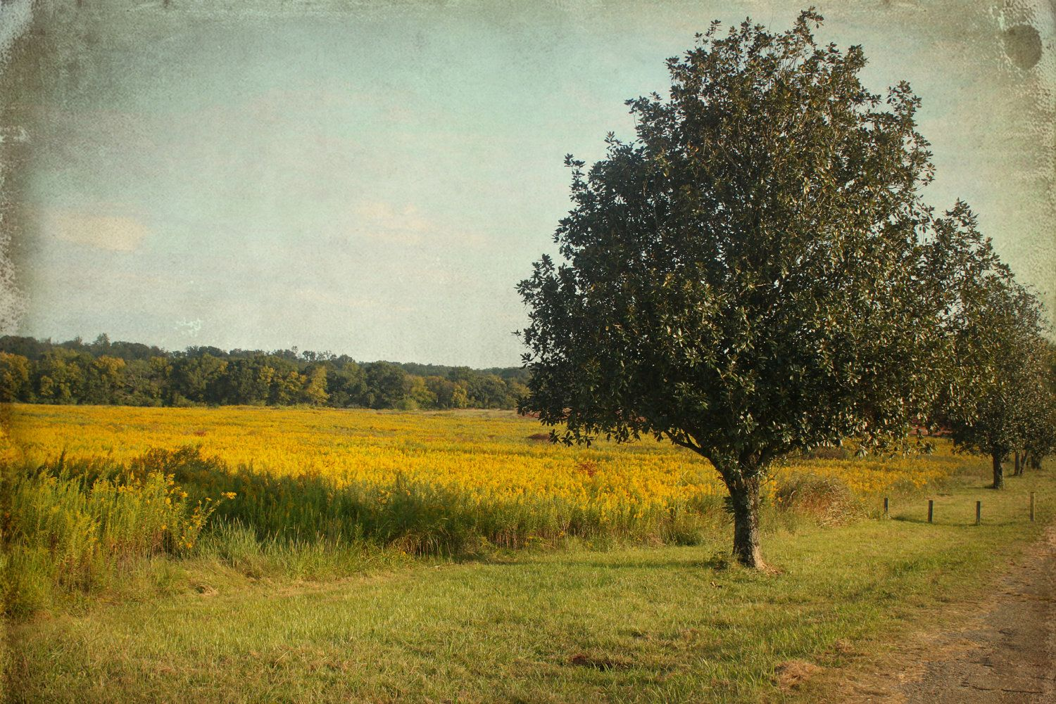 Flower magnolia tree field rural country by SouthernHippie on Etsy, $55.00