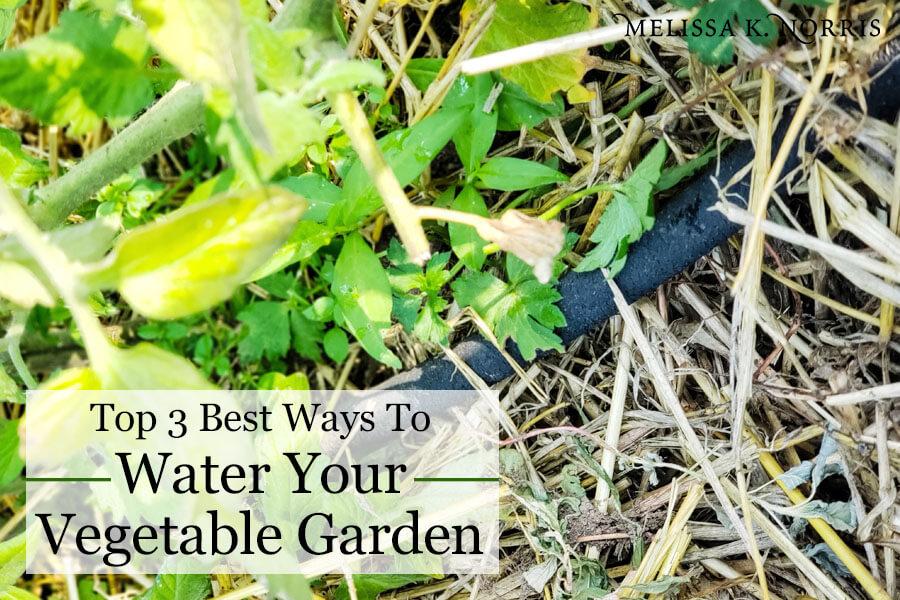 Best Way To Water Vegetable Garden Increase Harvest 400 x 300