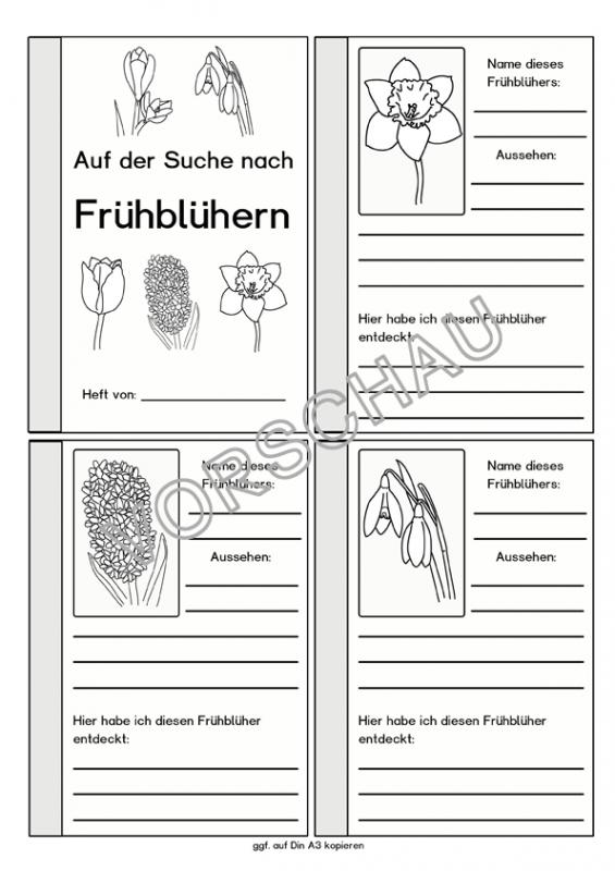 Frühblüher-Werkstatt für die Grundschule | Лайки на Pinterest ...