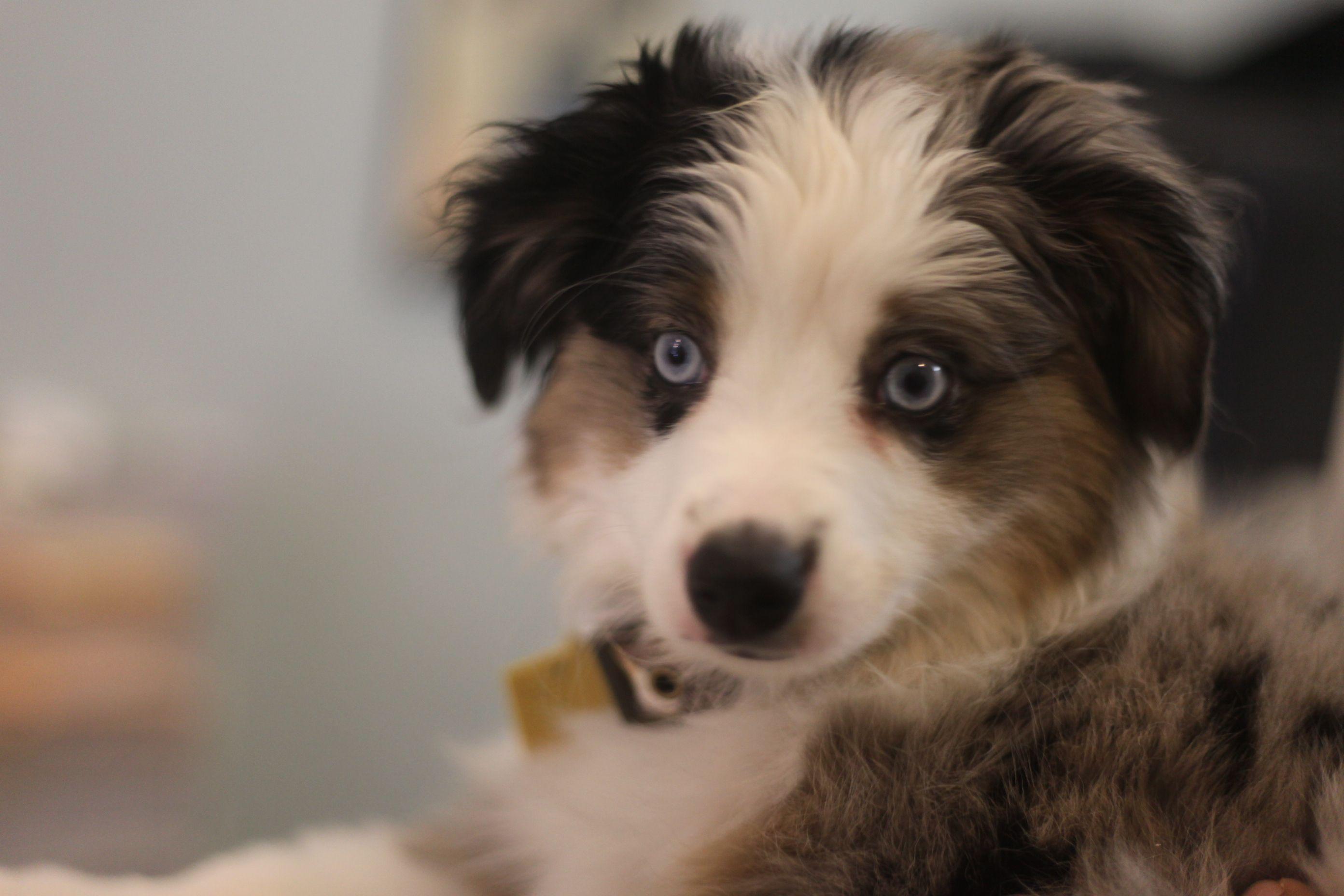 The Informant Washington Dc Pets Magazine Dog Facts Dog