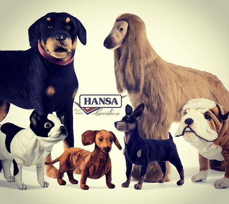 rottweiler #pincher #bulldoginglese #bassotto #bulldogfrancese