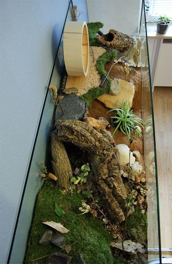 Akvarium 167x50x40 Akvarium S Naturalnymi Sredstvami Dlya Teo Stranica 4 Korpus Prezentacii Www Das Hamsterforum D Hamster Gehege Hamster Ideen Hamster