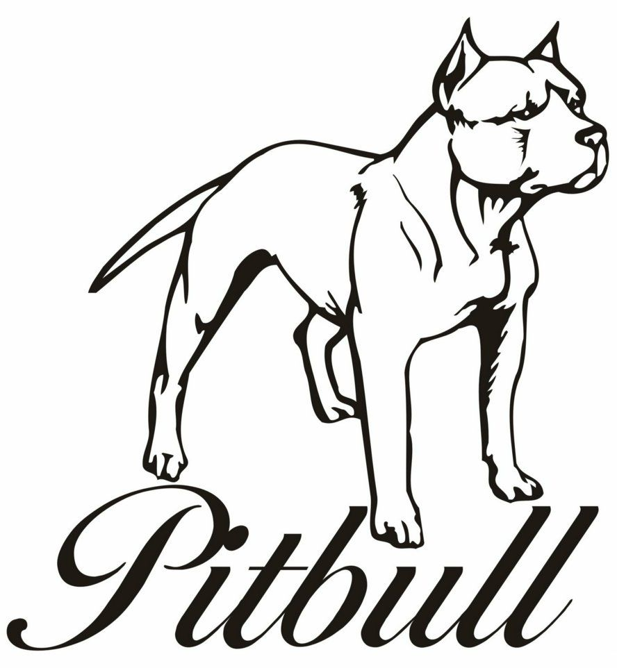 Pitbull Coloring Pages Pitbull Drawing Puppy Coloring Pages