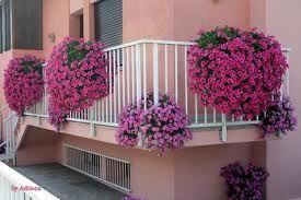 balconi fioriti Cerca con Google Piante da balcone