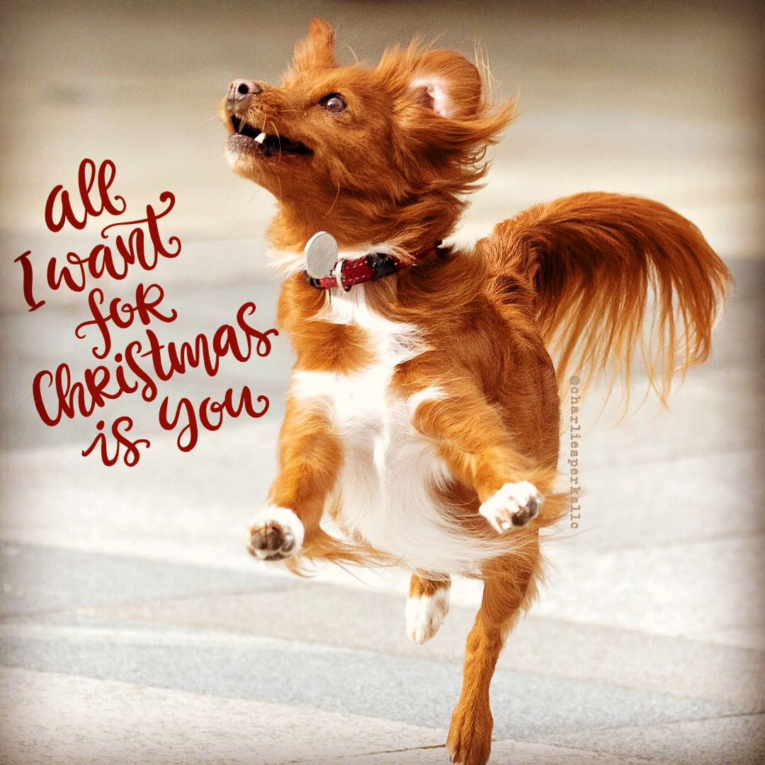 All I Want For Christmas Is You Check Out Our Store Pampereddog